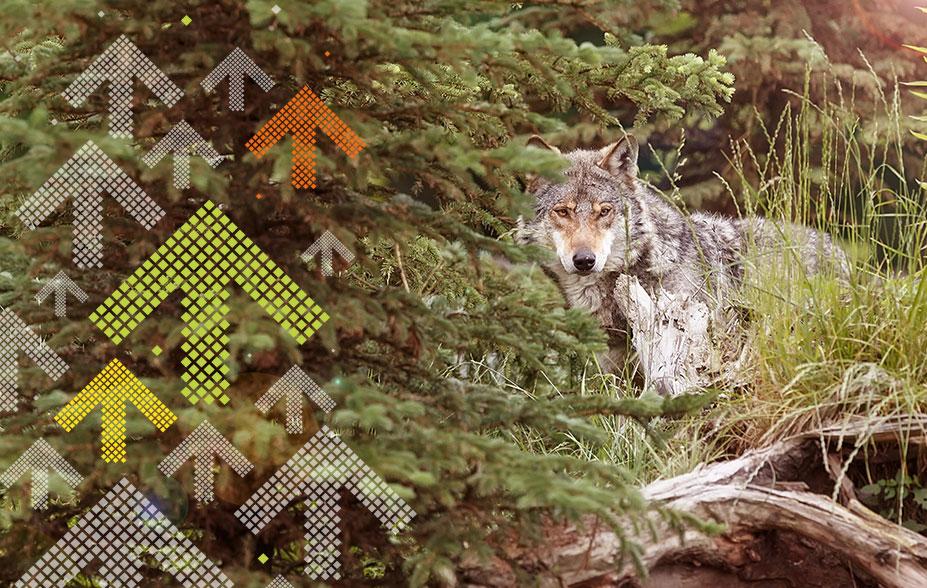 Bruderhaus Wolf