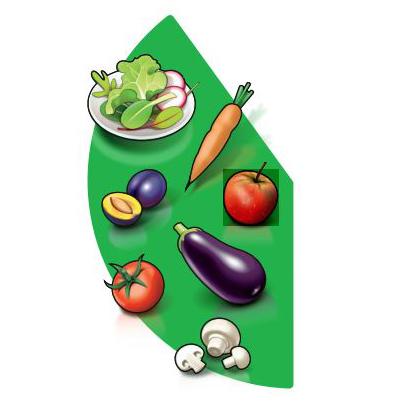Tellermodell der Schweizerischen Gesellschaft für Ernährung, grüner Bereich. Gemüse und Früchte