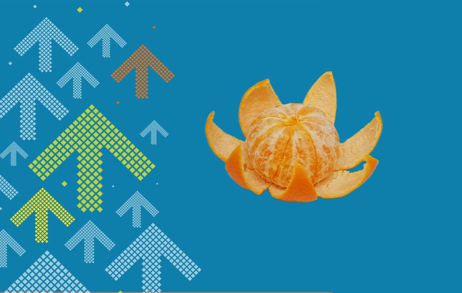 Mandarine Seerose Znüni